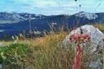 Summer Gasshuku Seminar on Velebit Mountain